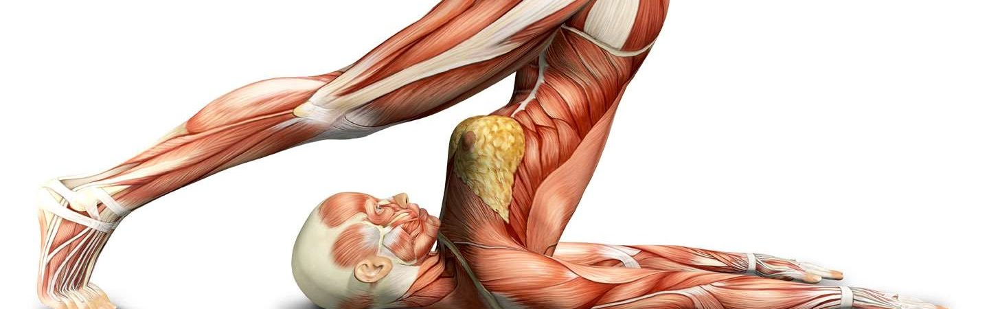 Yoga Anatomy London | Core Elements Short Courses London, UK