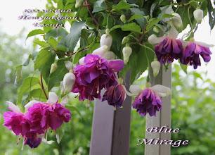 Photo: Blue Mirage
