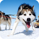 Malamute Dog Pack 2 Wallpaper icon