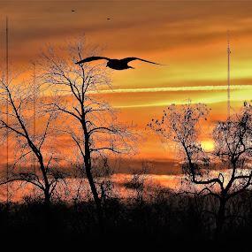 Take Flight by Kathy Woods Booth - Landscapes Sunsets & Sunrises ( flight, sunrise, daybreak, bird, silhouette, dawn )