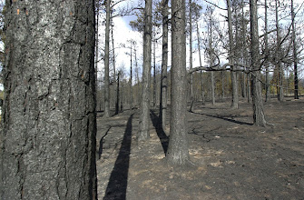 Photo: Hayman Fire North.  Stand Replacing burn next to Lost Creek wilderness area