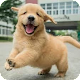 Download Chiots For PC Windows and Mac