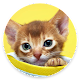 Cute kittens and cats wallpapers. High quality APK