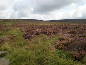 Photo: Moorland between Walshaw Dean Reservoir and Whuthering Heights