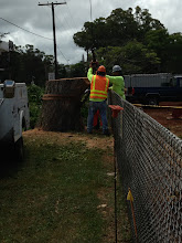 Photo: Bracing the remaining stump so it can be removed.