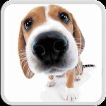 DOG LICKS SCREEN LWP FREE Icon