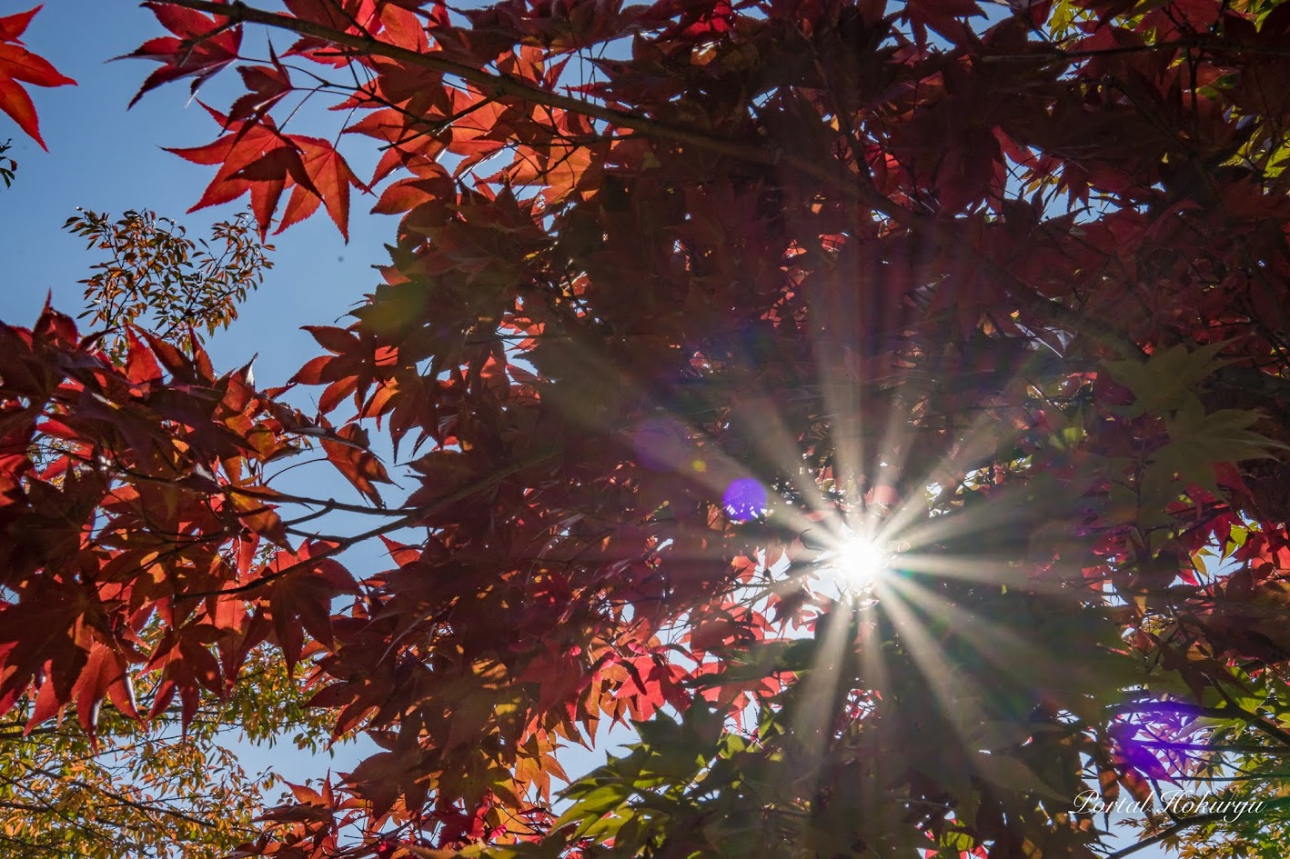 心も様々な色合いに染る季節