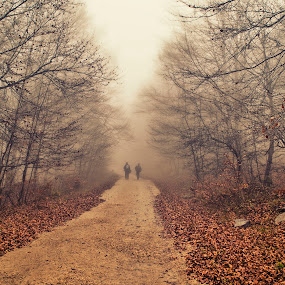 autumn leaves by Laurentzi Martinez Morilla - Landscapes Forests ( wood, nature, fog, green, forest, road, beech, myst, garyfonglandscapes, holiday photo contest, photocontest )