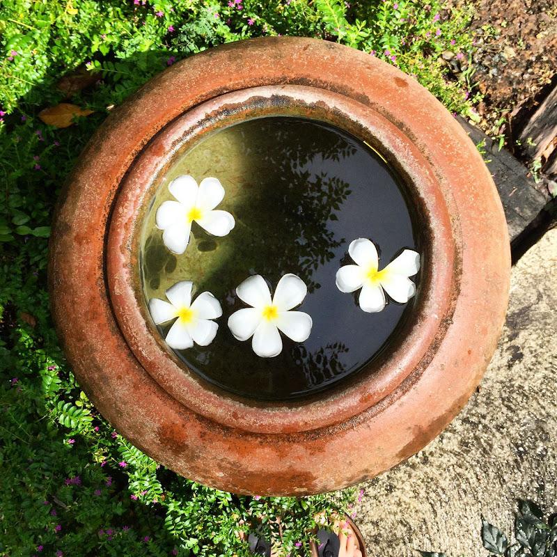 Margherite nel vaso. di Marcopag