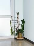 groene plant in koperen pot in de hoek van een gang
