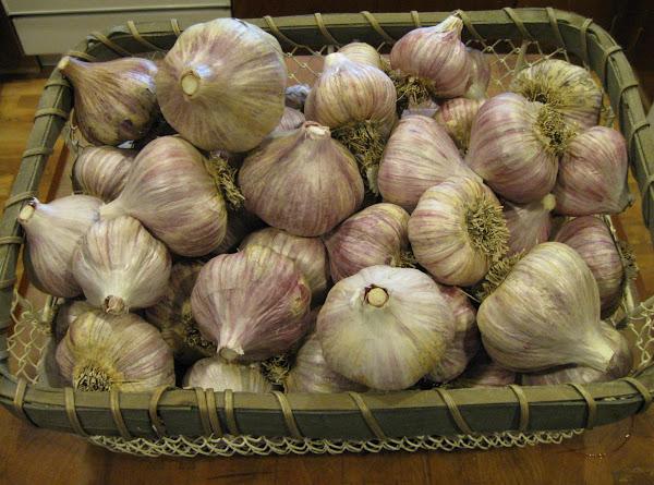 2013 Garlic Harvest Recipe