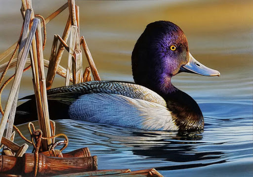 After Controversy, the Duck Stamp Contest May No Longer Require Hunting Scenes