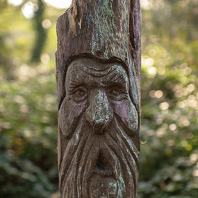 Tehidy Tree Man by Sarah Tregear - Nature Up Close Trees & Bushes ( art, tehidy, tree, carvings, man, carving, trees,  )
