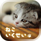 Cat Simulation Game 3D