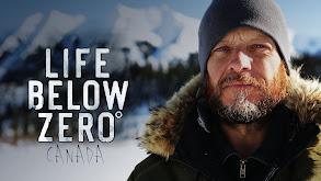 Life Below Zero Canada thumbnail