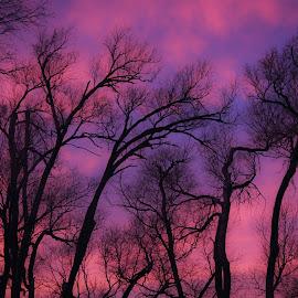 by Shelly Nichols Hellbusch - Landscapes Sunsets & Sunrises ( kaidenbdaysunset )