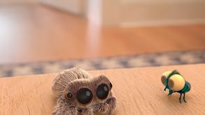 Big Jumping Spider thumbnail