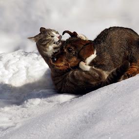 by Zeljko Padavic - Animals - Cats Playing