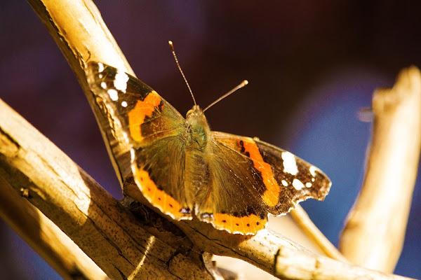 farfalla al sole di Photolo