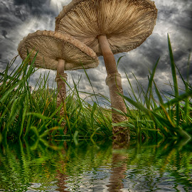 Give me shelter by Egon Zitter - Digital Art Things ( clouds, mirror, reflection, sky, autumn, fall, parasol, meadow, toadstool, fungus, hood )