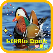 Little Duck wallpaper