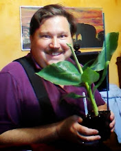Photo: Happy Pappy - My Musa Cavendish Banana Tree when I received him. My Blog is at: http: PaulsBananaPlantation.blogspot.com