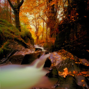 If You Go Down To The Woods Today by CLINT HUDSON - Landscapes Forests ( bear, teddy bear, autumn leaves, autumn, fairy tail, autumn colour, ted, river )