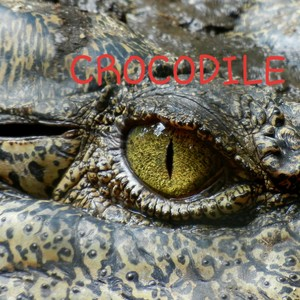 Crocodile Upload Your Music Free