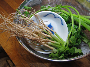 Photo: great-looking cilantro roots!
