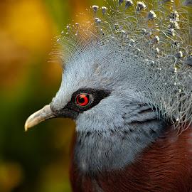 by Nik Andrews - Animals Birds