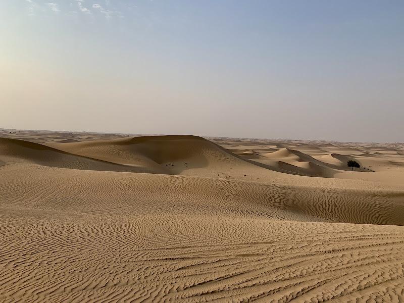Un albero nel deserto  di Renata Roattino@jhonninaphoto