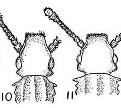 http://crawford.tardigrade.net/bugs/figures/sawtooth.jpg