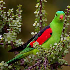 by Vino P - Animals Birds (  )