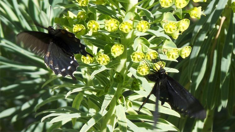Flies 3.jpg