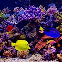 Amazing Aquariums In HD icon
