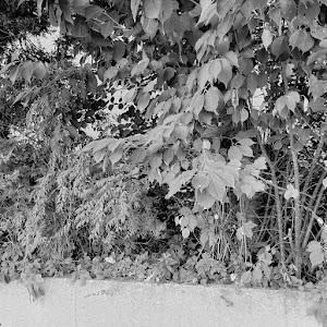 レヴォーグ VMGのカスタム事例画像 しぐレヴォさんの2021年08月28日20:28の投稿