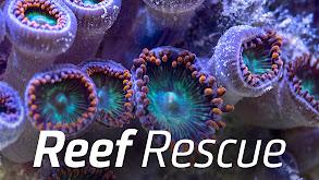 Reef Rescue thumbnail