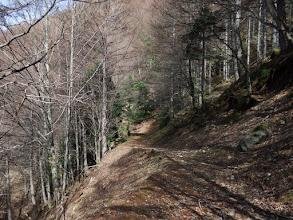跡はひたすら林道歩き