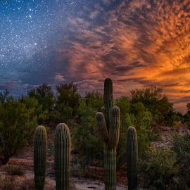 Early Stars by Charlie Alolkoy - Digital Art Places ( clouds, sky, desert, sunset, stars, cactus )