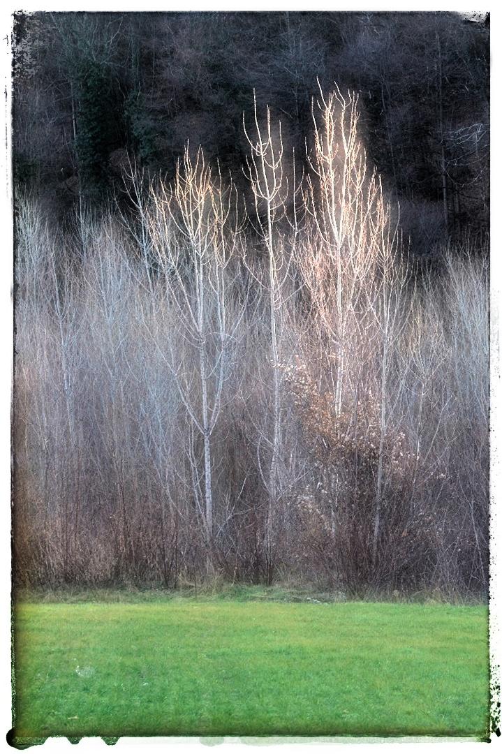 La magia dei primi fili d'erba di rsuffia