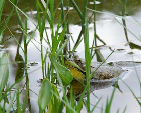 Photo: Frog at Ricker Pond State Park by Linda Carlsen-Sperry.