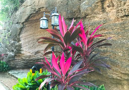 antigua-foliage.jpg - Tropical foliage in Antigua.