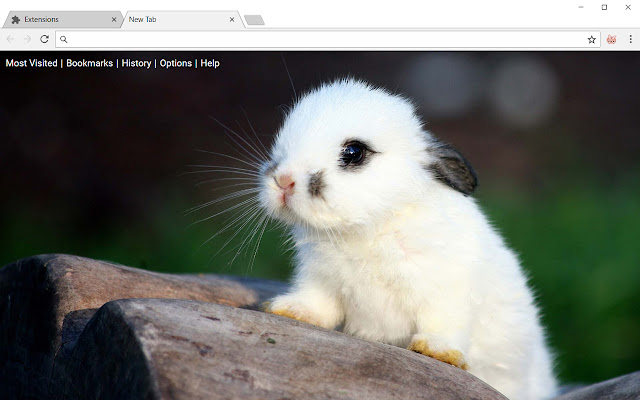 Bunny Hd Wallpapers Rabbit New Tab Theme