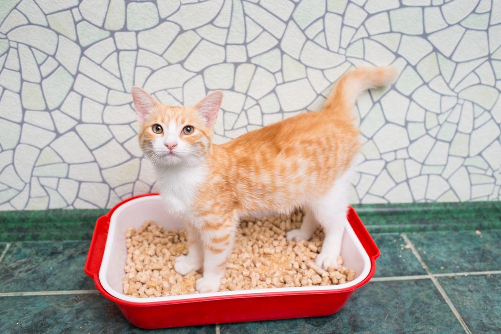 凝結砂貓砂盆