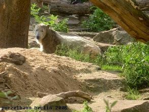 Photo: Knut hat in der Schlafkuhle Platz genommen ;-)