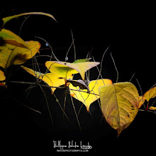 Photo: Hi Folks,  A good way to start the day, feel free to download my new free ebook - Autumn 2012 http://bit.ly/Whvmxo - Enjoy ;-)  #autumnphotography  #fallcolors  #ebooks