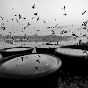 The infinity pools  by Kallol Bhattacharjee - Black & White Street & Candid ( winter, boat, nikon, birds, gulls, river )