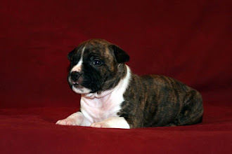 Photo: Mia Albachiara Aurora Boreale (F)