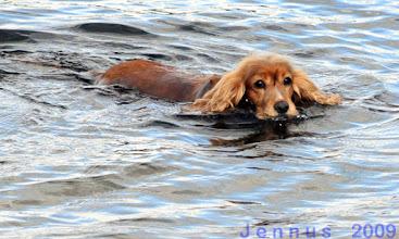 Photo: Schwimmer