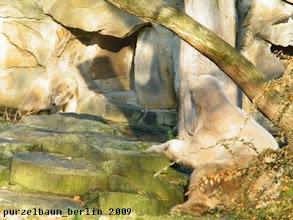Photo: Knut beobachtet Gianna ;-)